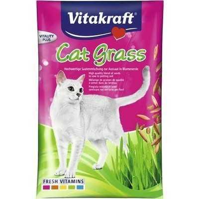 KATZENGRAS-kočičí trávnik